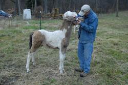 Bryce & foal68.JPG