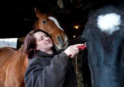 horses rae ann