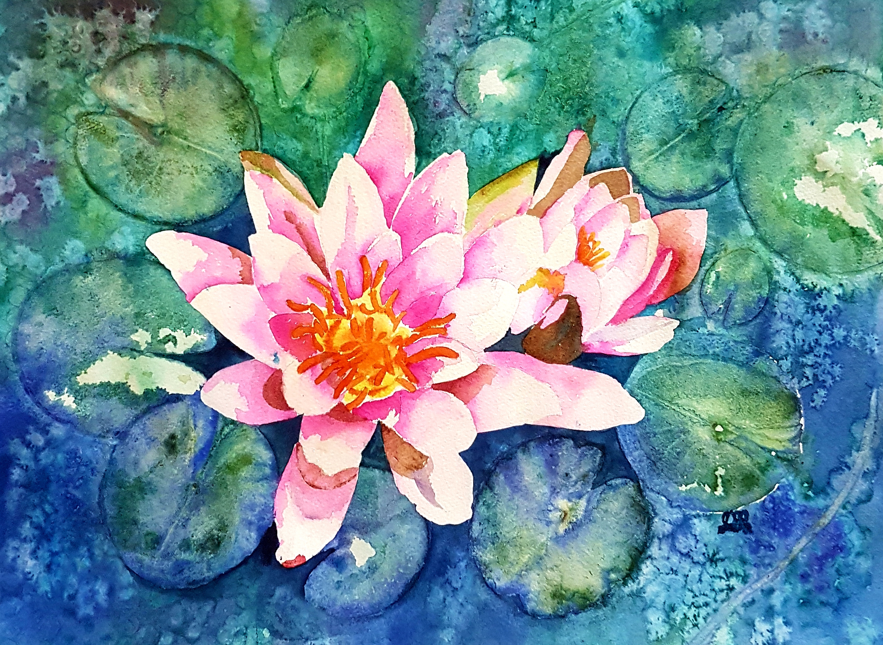 Spring Waterlily
