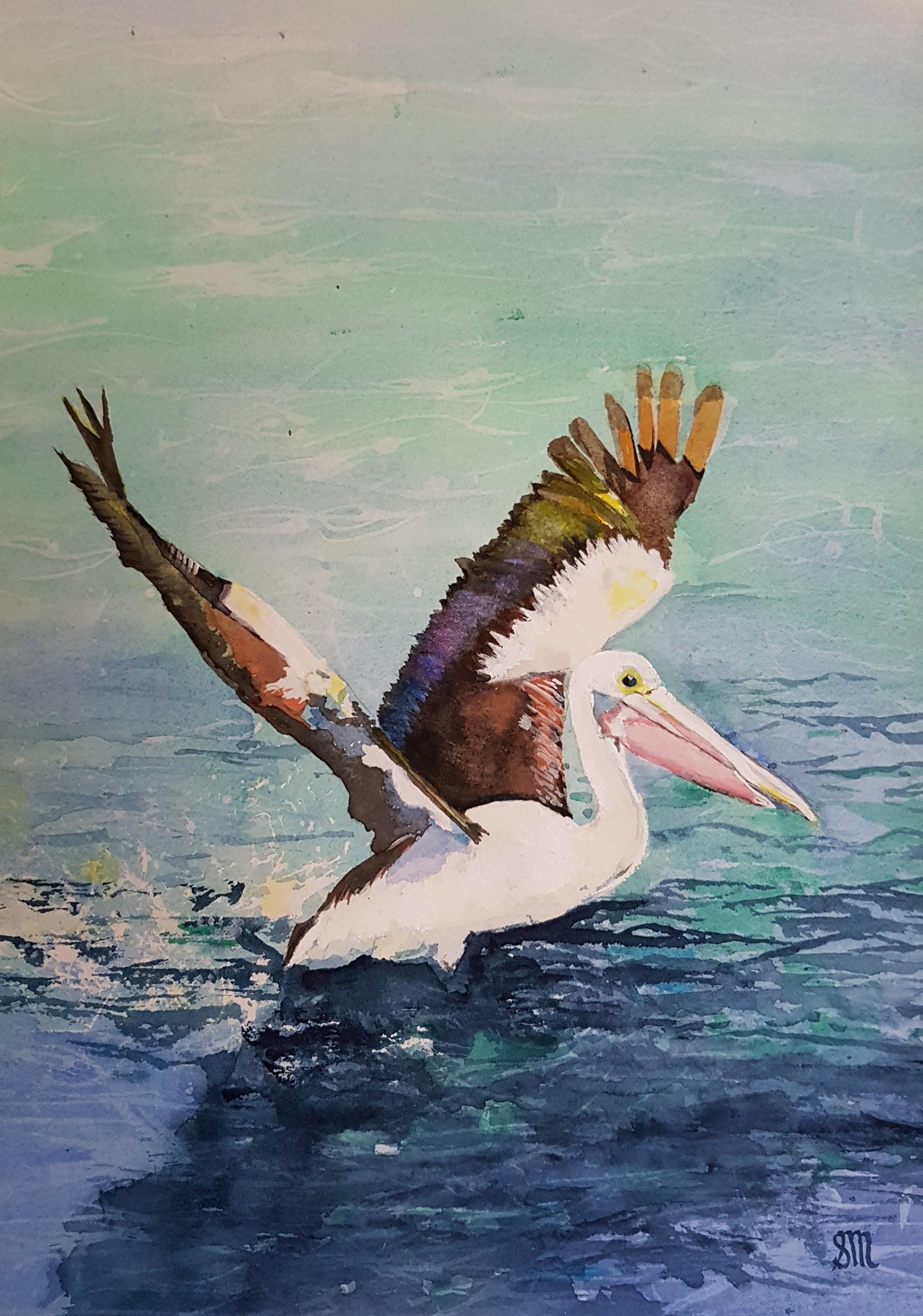Skipper Pelican