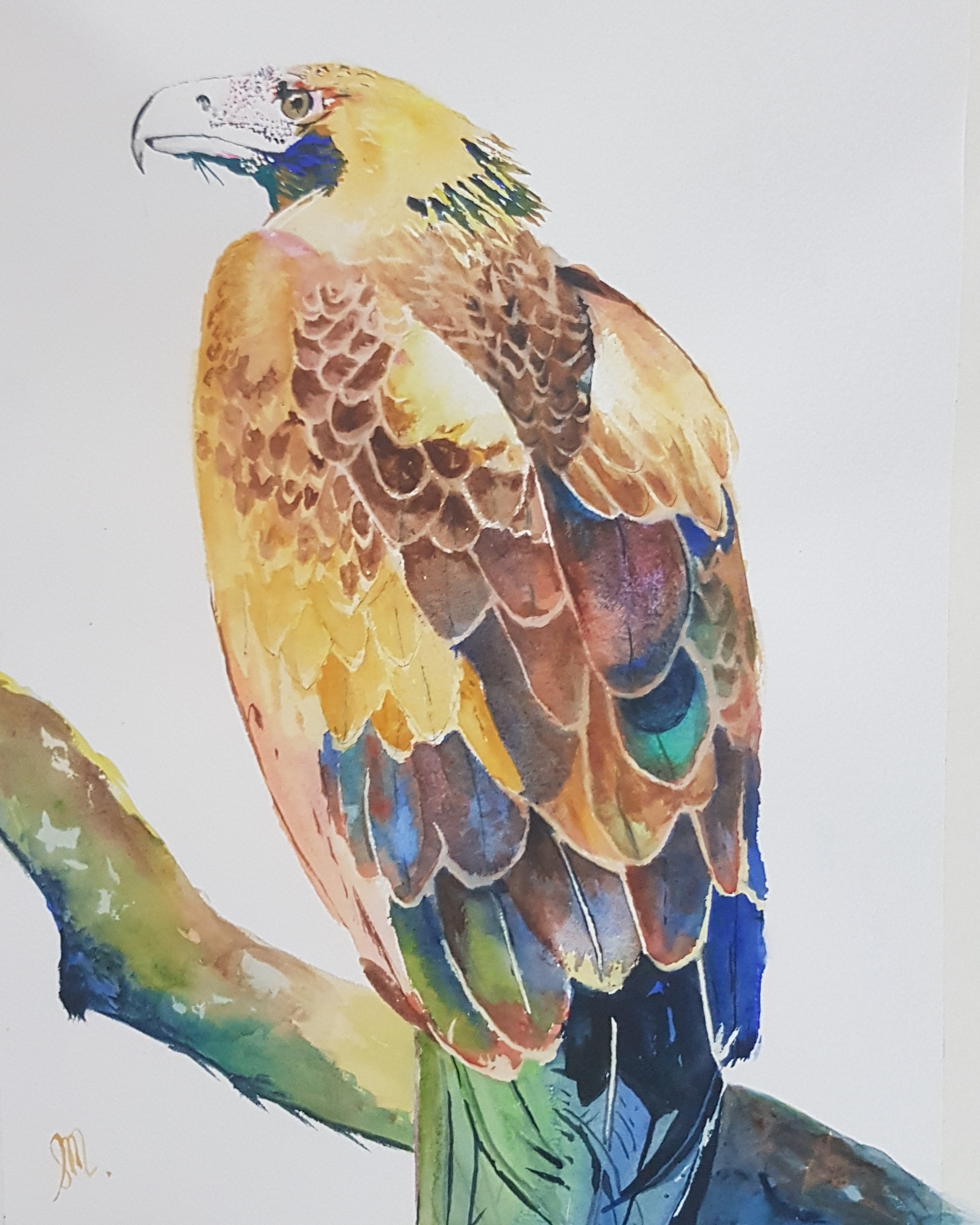 Wedgetail Eagle-Watercolour-Sold-Kept