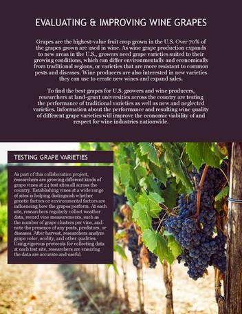 Improving Wine Grapes (NE-1020 | 2012-2017)