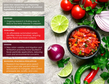 Salsa Ingredient Research