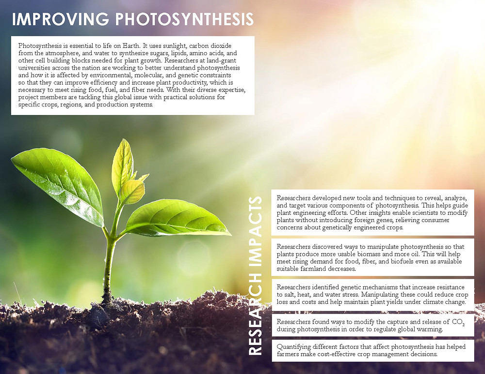 Click to view/download a PDF of the NC1200 Impact Statement: Improving Photosynthesis