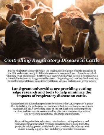 Controlling Respiratory Disease in Cattle (NC-1192 | 2011-2016)