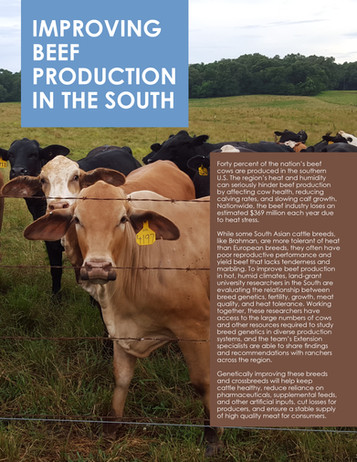 Improving Beef Production in the South (S-1064 | 2014-2019)