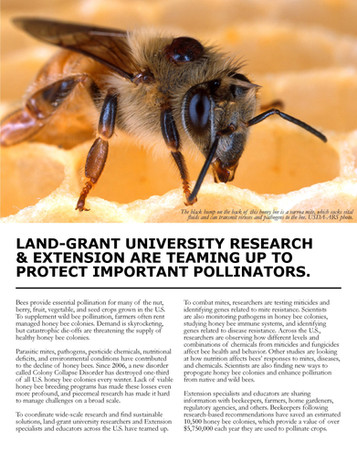 Sustainable Solutions to Bee Health (NC-1173 | 2014-2019)