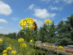 Bees harvesting.jpg