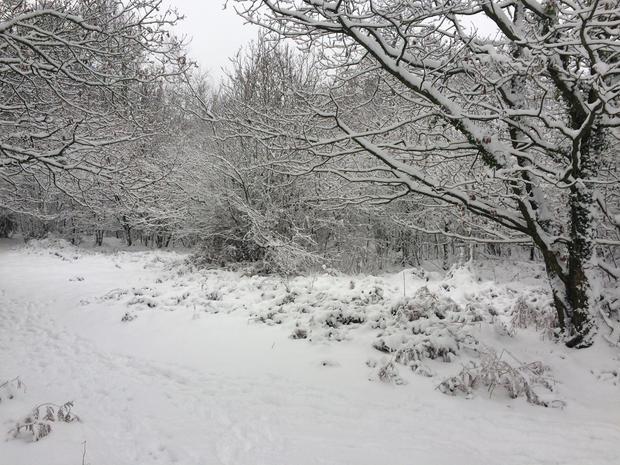Ninewells Wood