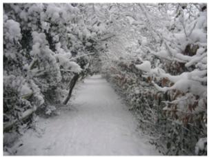 Snow in 2009