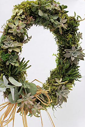 Live Succulent Wreath, 18 in