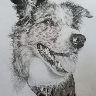 Pet Portrait.png