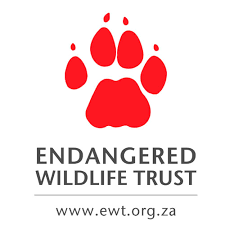 Wildlife ranchers work with the EWT to give African Wild Dogs a chance to roam free
