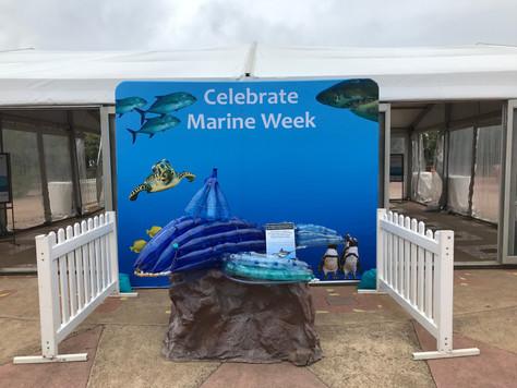 Vaquita Update-Marine Week
