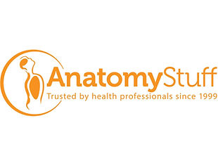 Anatomy-stuff.jpg