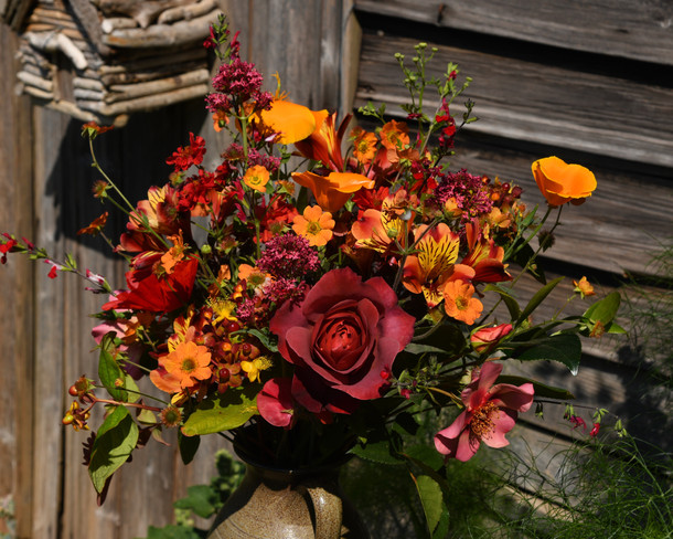 """Eschscholzia, salvia, """"Totally Tangerine"""" geum, valerian, ghot chocolate rose, alstromeria, """"For Your Eyes Only"""" rose, f"""