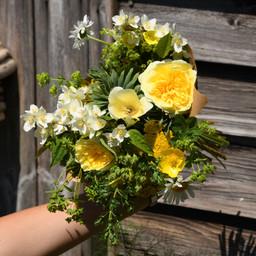 Pilgrim rose, eschscholzia, philadelphus, euphorbia, and leucanthemum.