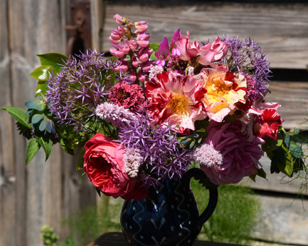 """""""Crazy for you"""" rose, """"Gertrude Jekyll"""" rose, alliums, lupins, cerinthe, and persicaria"""
