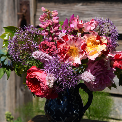 """Crazy for you"" rose, ""Gertrude Jekyll"" rose, alliums, lupins, cerinthe, and persicaria"