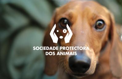 Project António - Sociedade Protectora dos Animais