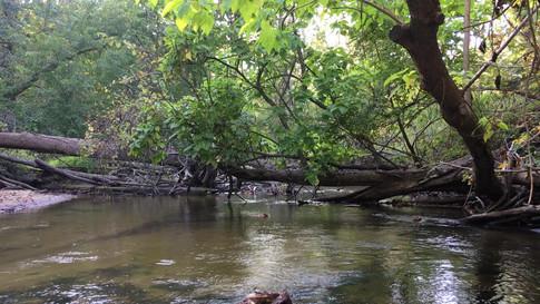 Kayaking down Black River Heritage Trail