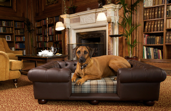 lounge with luxury dog bed