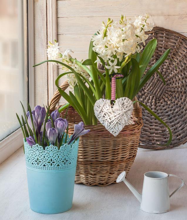 Hyacinths in a basket