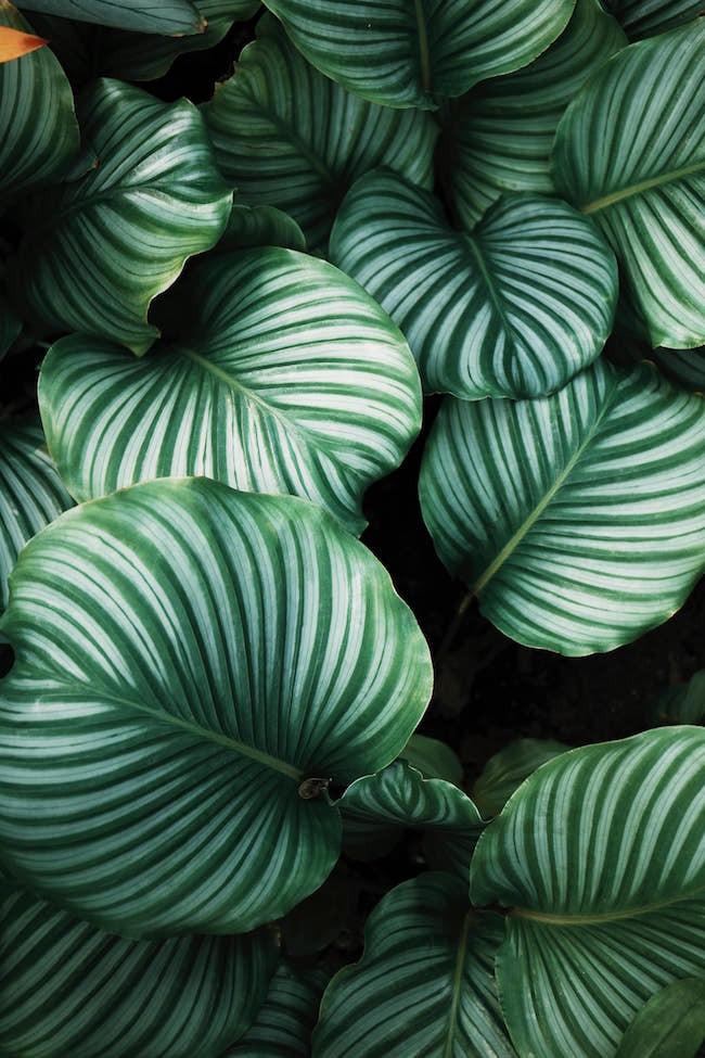 Patterned house plants