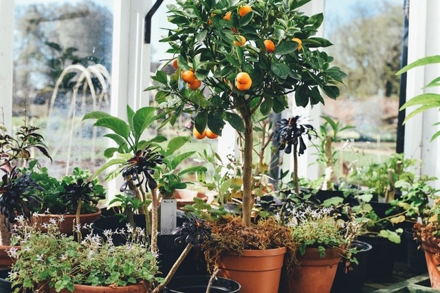 Plants for a conservatory