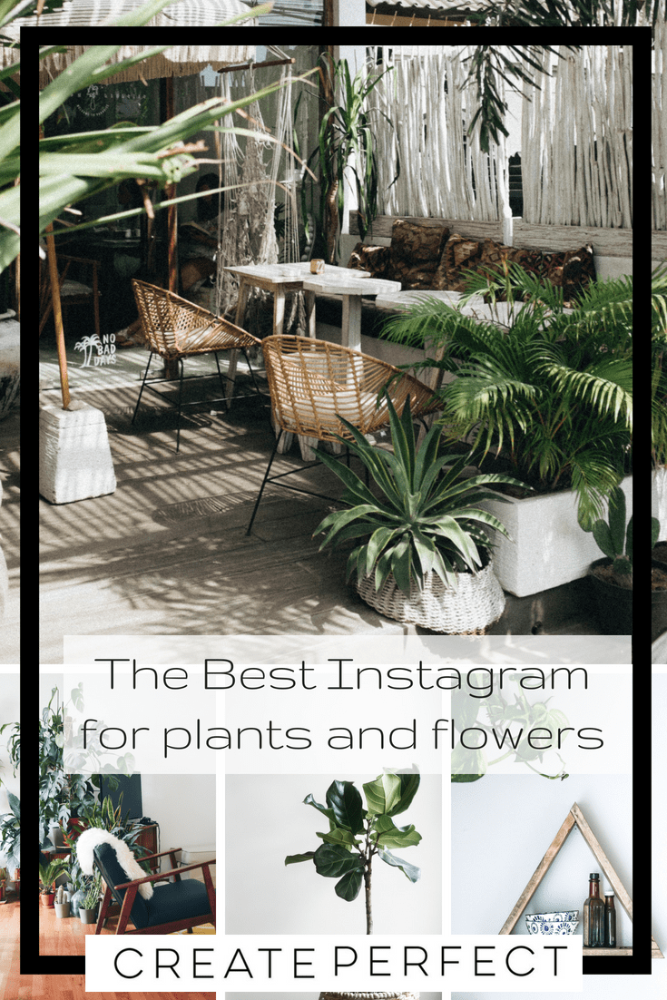 Instagram accounts for plant lovers
