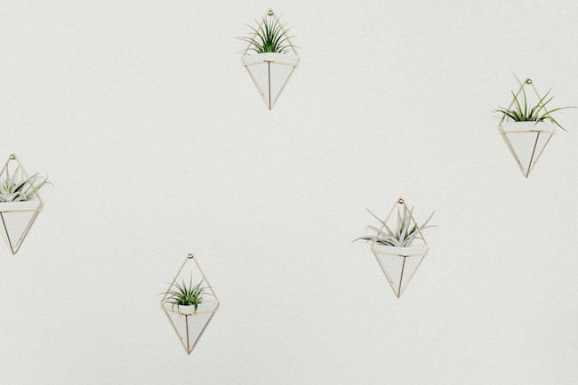 wall mounted air plants