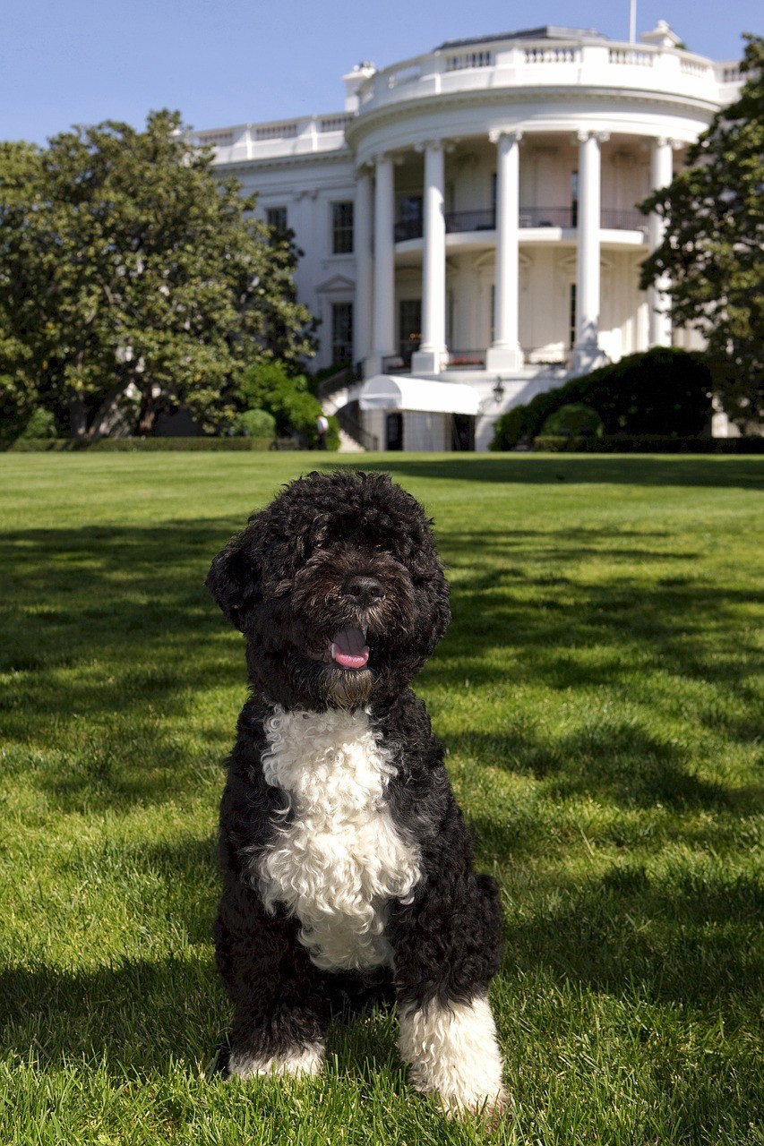 Whitehouse dog