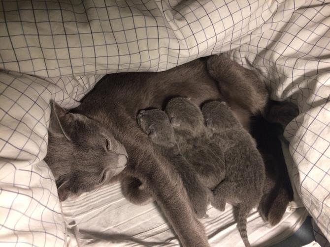 Hello world! Kattungarna är här!