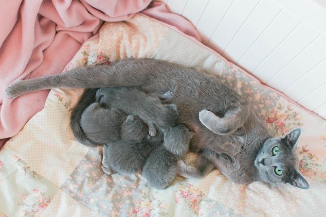 Vera's kittens are here!