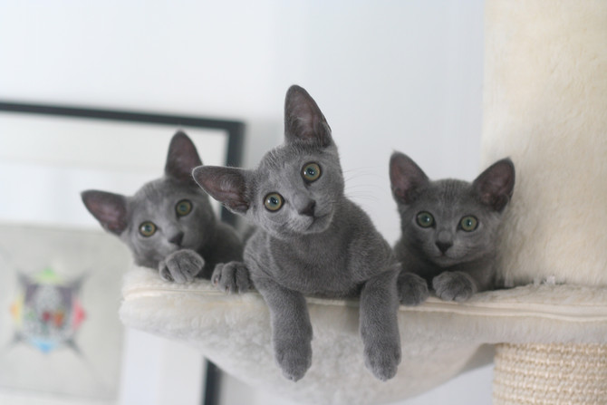 Can't believe it - the kittens in F-litter are more than 6 months, I at last they got their pict