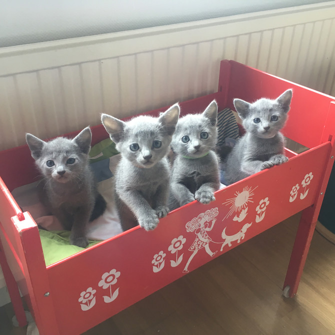 Enorm efterfrågan på kattungar!
