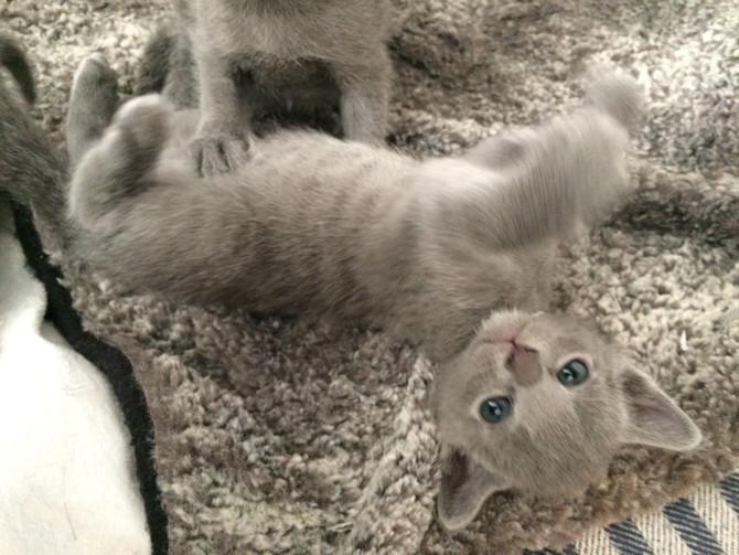 Finally an update on the kittens!