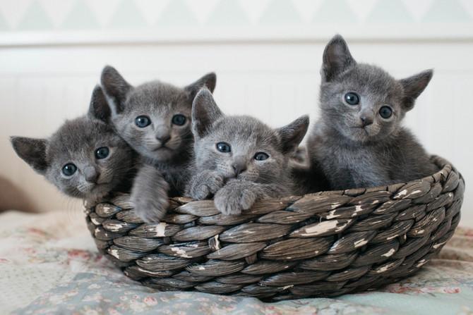 Meet Gilbert, Gary, Gösta and Garbo 5 weeks!