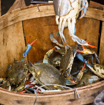 It's Not Easy ~ Crabs In A Bucket