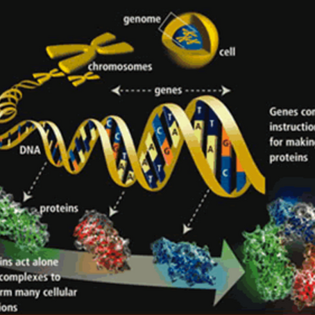 DNA mapping will unlock your potential