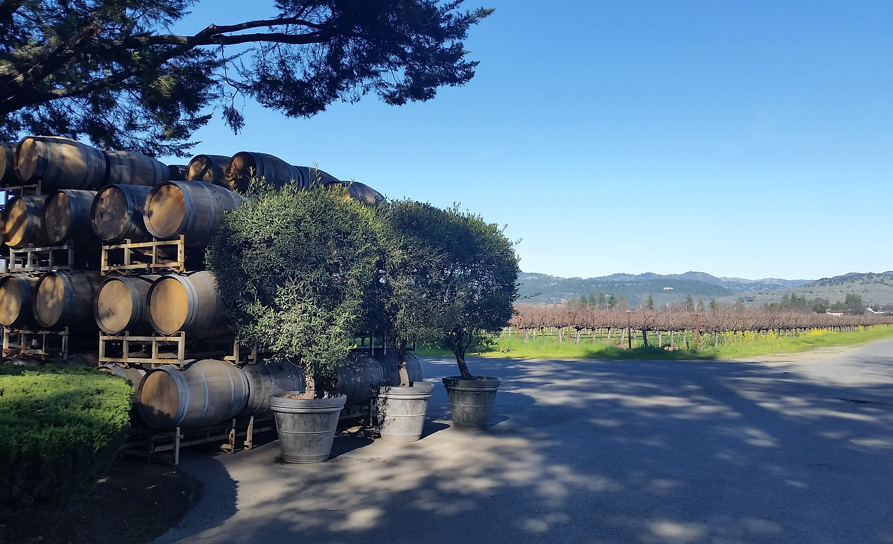 Inglenook Winery, Rutherford (Napa Valle