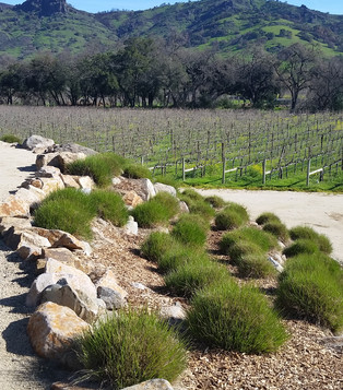 Stag's Leap Wine Cellars (Napa Valley, California)