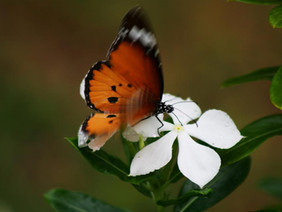 Inspiration of the Day: Happiness is a Butterfly...