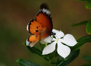 Kind Karma Rahini Yoga. Butterfly Breath.