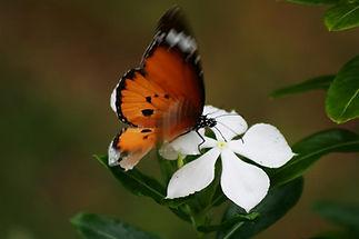 Huiles essentielles ecole aromathérapie olfactothérapie