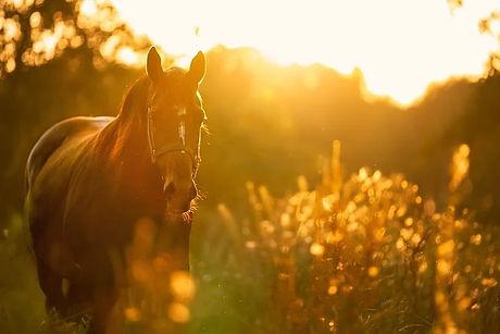 Découverte du Vexin Français, balades à cheval, balades à dos d'ânes, séjours touristiques à vélos électriques, éco-tourisme, cyclo-tourisme
