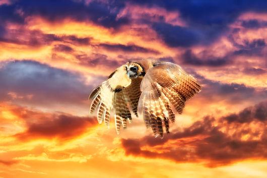owl-3796932.jpg
