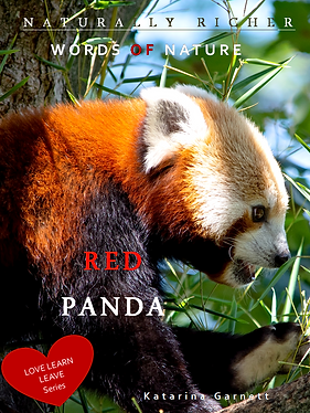RED PANDA cover 20,32 x 25,4.png
