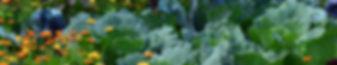 white-cabbage-2521700.jpg