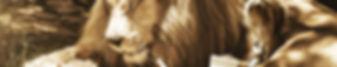 mammal-3128440.jpg